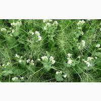 ООО НПП «Зарайские семена» предлагает оптом семена: горох посевной