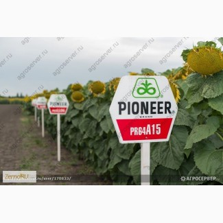 Продам: Семена подсолнечника, Пионер, Лимагрен, Сингента, Еврализ, Майсадур, Агроплазма