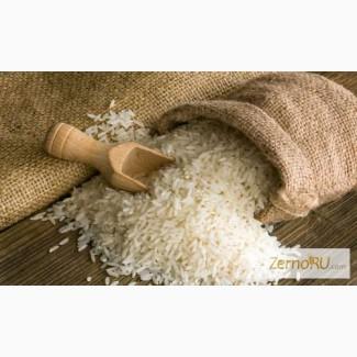 Продам рис Кубанский(ГОСТ, ТУ). Производитель