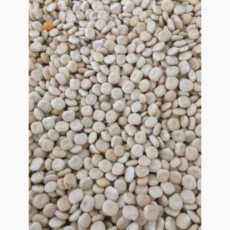 ООО НПП «Зарайские семена» закупает семена:люпин от 20 тонн