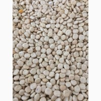 ООО НПП «Зарайские семена» закупает семена: люпин от 20 тонн