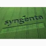 Семена подсолнечника СИНГЕНТА ( Syngenta)