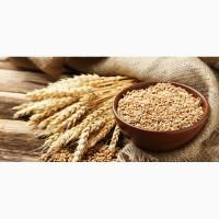 Услуги хранения зерновых и технических культур