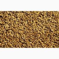 Пшеница фураж новый урожай