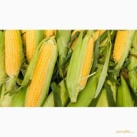 Гибриды семян Кукурузы (Pioneer, Singenta, Monsanto, NS, Limagrain)