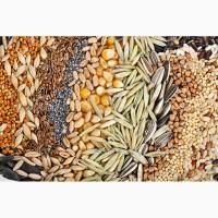 Куплю головнёвую пшеница