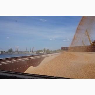 Закупаем Пшеницу.4.5 классов с места