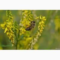 ООО НПП «Зарайские семена» закупает семена: донник желтый от 40 тонн