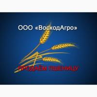Продаём пшеницу