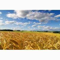 Срочно купим пшеницу 3 класс, порт Астрахань