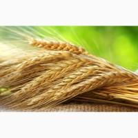 Купим пшеницу, сою, кукурузу и ячмень