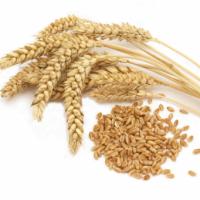 Закупаем на постоянной основе пшеницу (Беларусь). Большие объемы. Оплата по факту