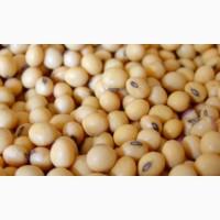 Продам семена сои Пруденс - 2 репродукция