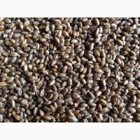 Реализуем пшеницу 4-5 класса