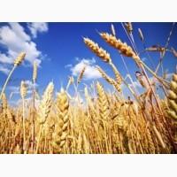 Работа зерновозам