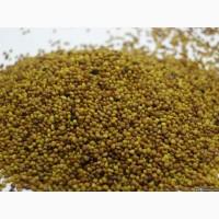 ООО НПП «Зарайские семена» закупает семена: козлятник от 20 тонн