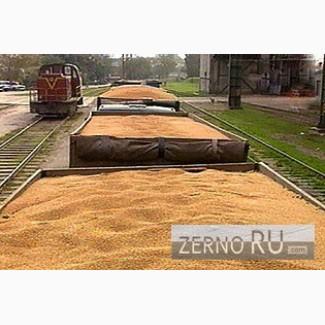 Пшеница 2 класса ГОСТ