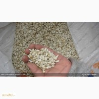 Продам: Семена сафлора Александрит