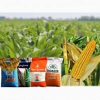 Семена подсолнечник и кукуруза (Сингента, Лимагрейн, Монсанто, Майсадур, Евралис, КВС)