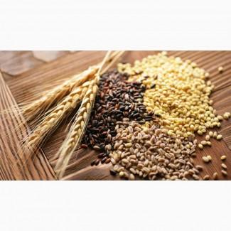 Продам пшеницу 3-го класса