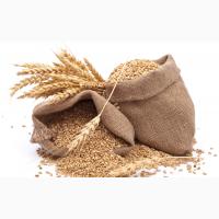Закупаем фуражное зерно в мешках