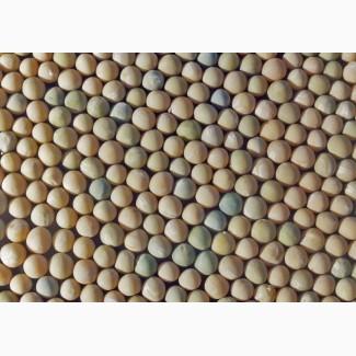 Семена гороха(полевой, пелюшка)