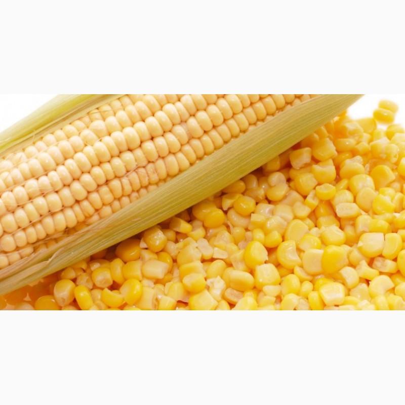Ооо элеватор кбр терек семена кукурузы сталкер оп 2 где найти штаны толика на элеваторе