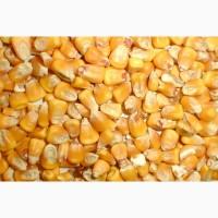 Срочно купим кукурузу фураж в порту Астрахань, Кавказ, Оля