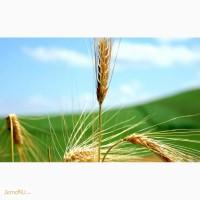Оптовая продажа Пшеница 3 класса твёрдых сортов