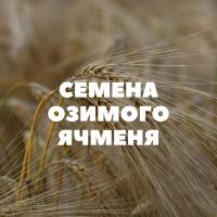 Продам семена озимого ячменя на посев