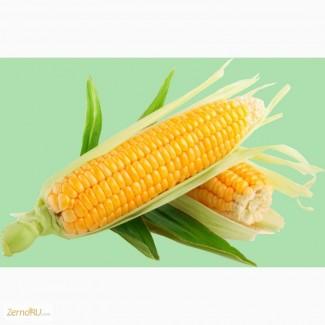 Семена гибридов кукурузы П7709, П8400, ПР37Н01, ПР39Д81, ПР39Ф58, ПР39Х32