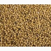 Амурская соя, Крупный опт, от Производителя. Soy. Soya beans. Amur region
