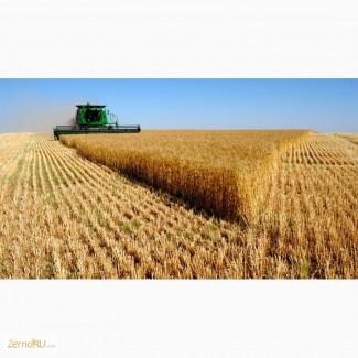 Оптовая продажа Пшеница 5 класса мягких сортов с клейковиной 16%