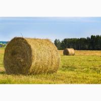 Продаем луговое сено в рулонах и кипах. Урожай 2017. амбарное хранение