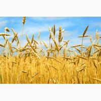 Экспорт кукурузы в Эфиопию