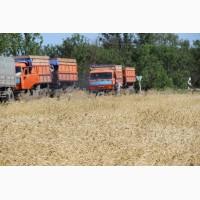 Зерновозы для уборки урожая