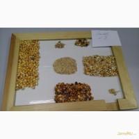 ЧЕРКИЗОВО - продаем кукурузу НЕ ГОСТ