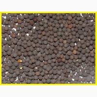Куплю семена вики озимой мохнатой от 20 тонн