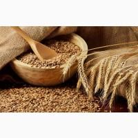 Куплю пшеницу ГОСТ 4 класс
