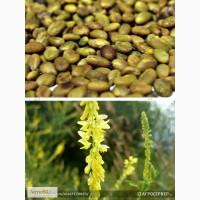 Семена донника желтого Сибирский 2