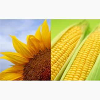 Гибридные Семена подсолнечник и кукуруза (Pioneer, Singenta, Monsanto, Kws, NS)
