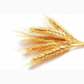 Пшеницу 3-5 класса