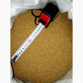 Продам горчицу белую (sinapis alba) 99, 9% чистота