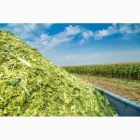 Продам силос кукурузный