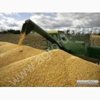 Куплю пшеницу 4 класс на Экспорт