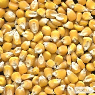 Оптовая продажа Кукуруза фуражная