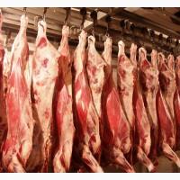 Куплю Говядина, коровы, полутуши, 100+, 1 категории, полутуши, охлажденные