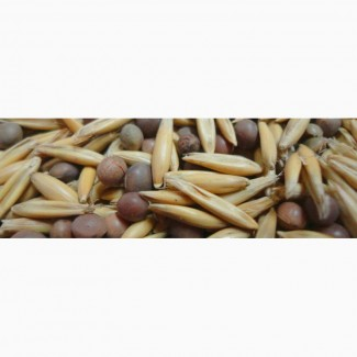 ООО НПП «Зарайские семена» закупает семена:вико-овсяная смесь от 60 тонн