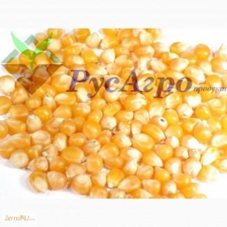 Кукуруза фуражная, колотая и ГОСТ