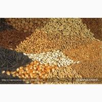 Закупаем зернобобовые смеси от 20 тонн оптом на постоянной основе